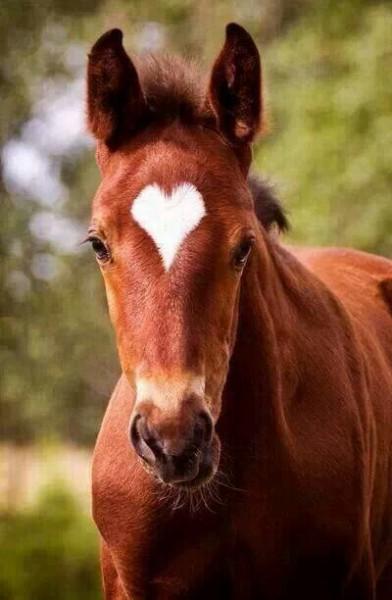 сердце-лошадь на фото