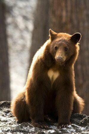 сердечко на медведе