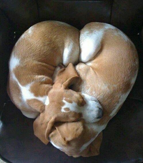 сердце из собак