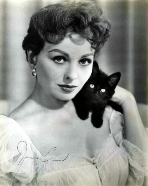 черная кошка и женщина фото