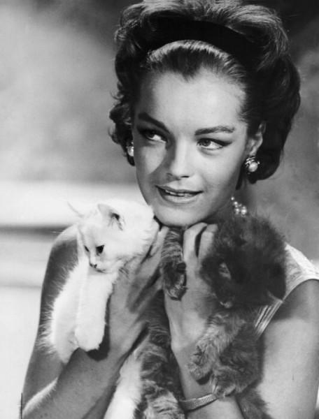 Высказывания великих писателей о кошках