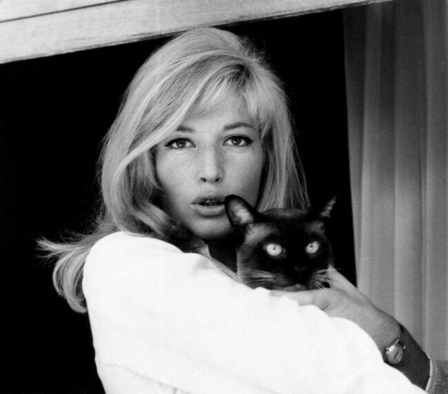 Monica Vitti с кошкой на фото