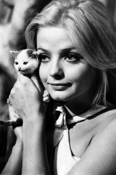Женщина с котятами на фото