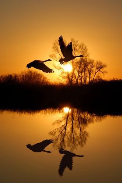 дикие птицы на фото