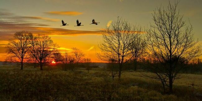 фото стаи птиц в полете