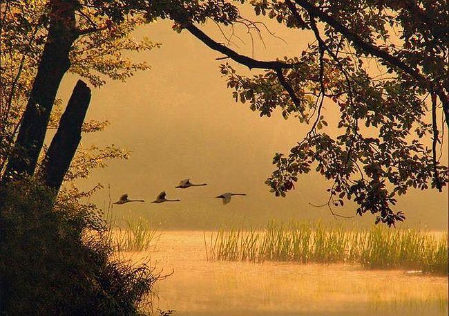 перелетные птицы фото