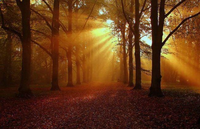 фото природа осень