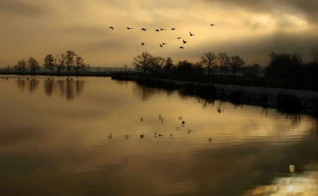 стихи про лебедей