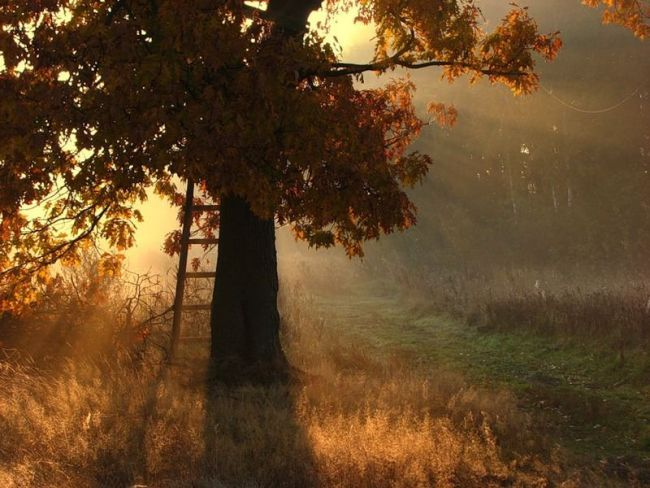 фото осени красивые