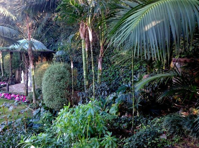 джунгли в райском саду