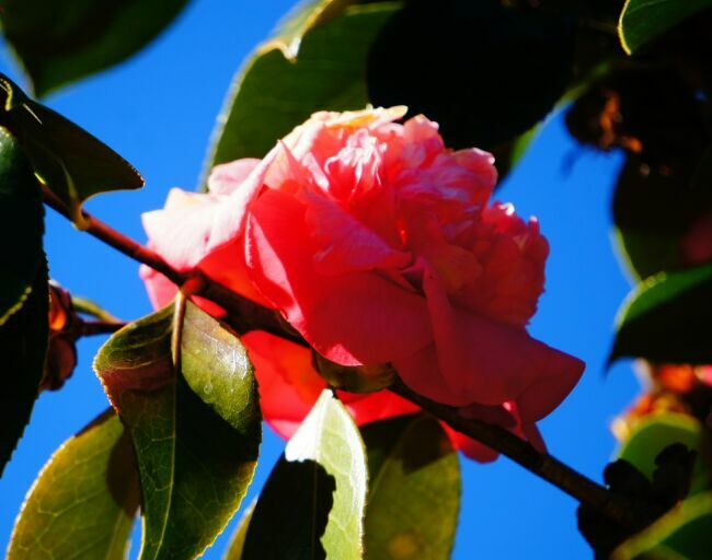 фото цветов в райском саду