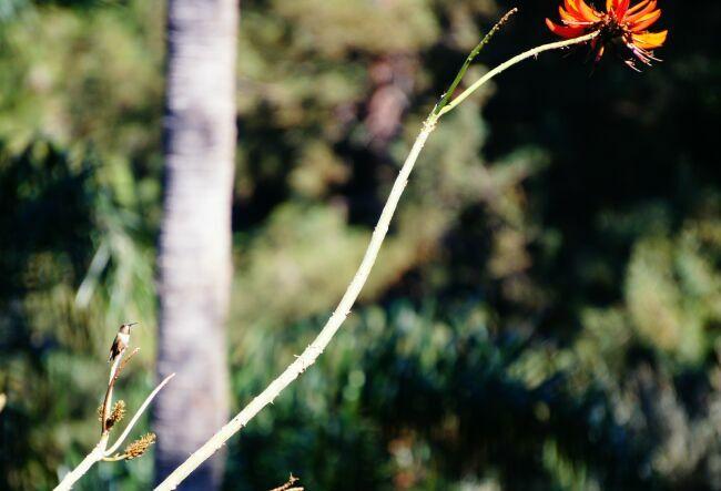 колибри в райском саду