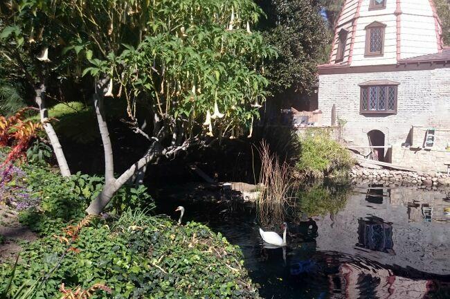 лебеди в райском саду