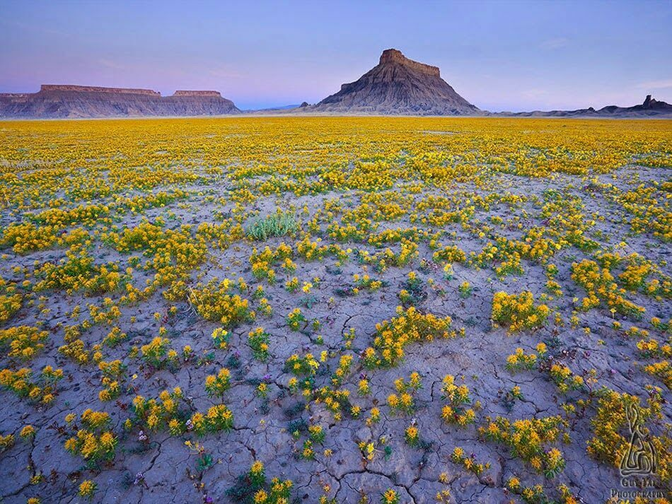 пустыня цветет на фото