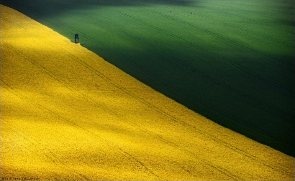 Пейзаж с косулями  Южная Моравия