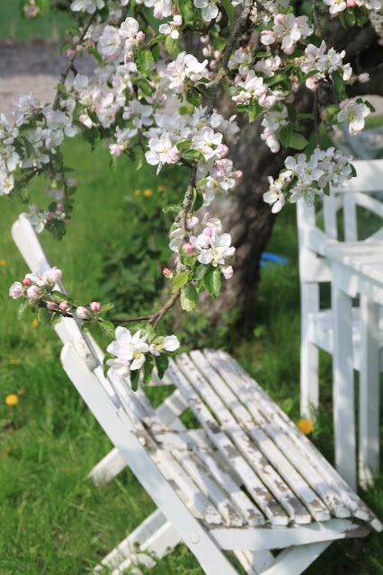 жасмин фото скамейка