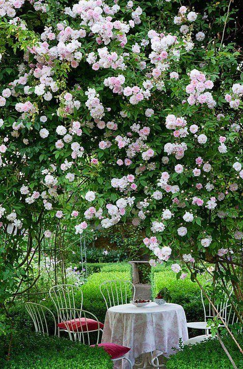 цветущие деревья весна