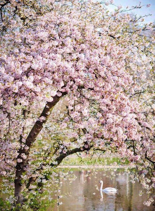 сад, цветение