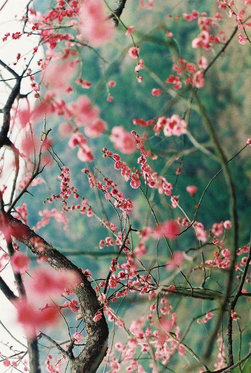 цветенье