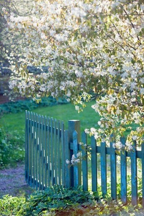 весна цветение калитка