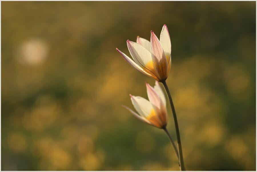 цветы от Сонаты